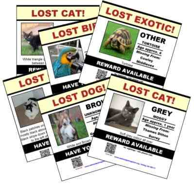 create lost pet poster