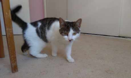 Found Tabby Cat in Ormskirk