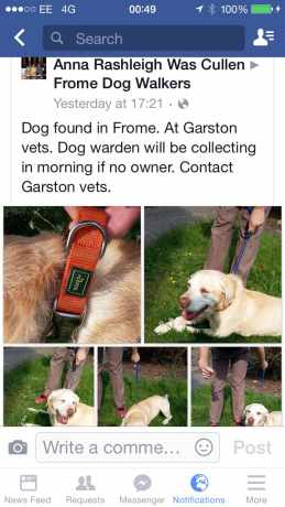 Found Labrador Dog in Frome