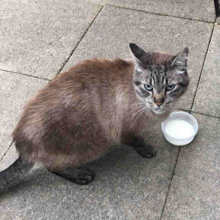 Found Mixed Breed Cat in Colchester CO1