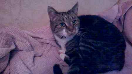 Found Tabby Cat in Franche, Kidderminster