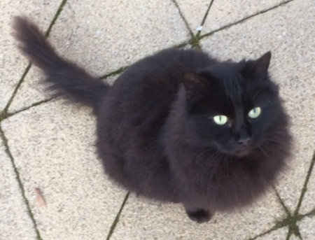 Found Semi-Long Hair Cat in Worplesdon, Guildford