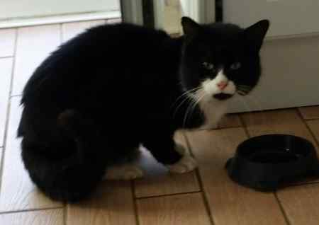 Found Domestic Short Hair Cats in Two Mile Ash, MiltonKeynes