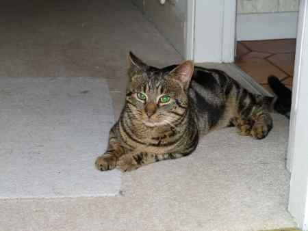 Found Tabby Cat in Burghfield