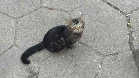 Found Tabby Cat in Blackpool
