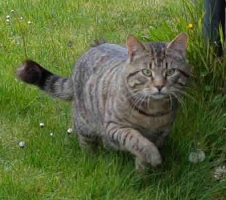 Found Tabby Cat in Wingham