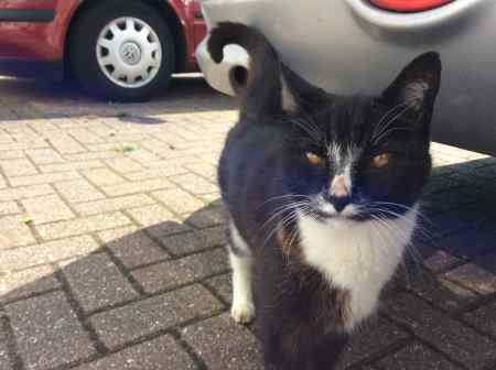 Found Unknown - Other Cat in Crawley