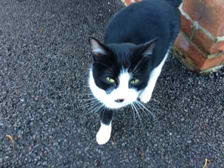 Found Unknown - Other Cat in Whepstead