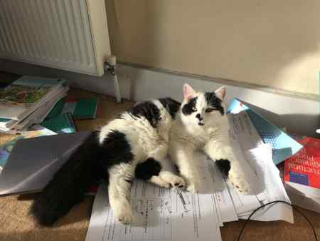 Found Unknown - Other Cat in London