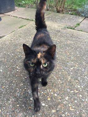 Found Tortoiseshell Cats in Kettering
