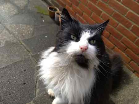 Found Semi-Long Hair Cat in Chingford