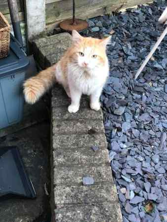 Found Unknown - Other Cat in Chester