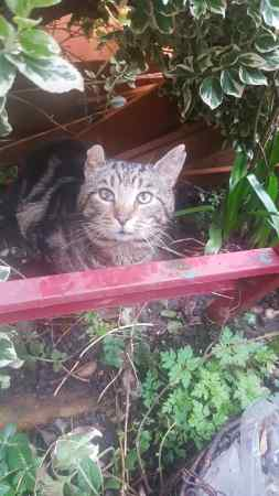 Found Unknown - Other Cat in Streatham