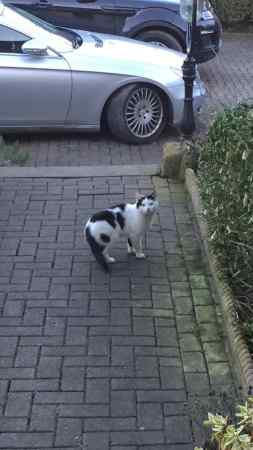 Found Unknown - Other Cat in Pudsey