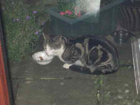 Found Moggy Cat in Derby