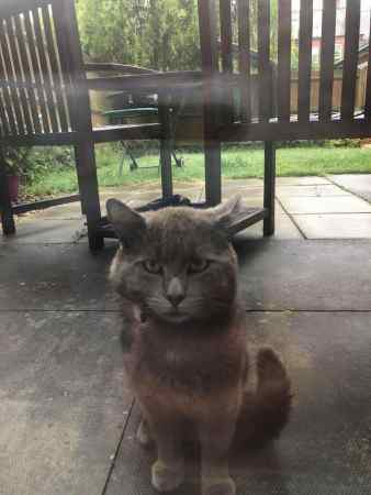 Found Unknown - Other Cat in Newark