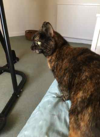 Found Tortoiseshell Cats in Storrington