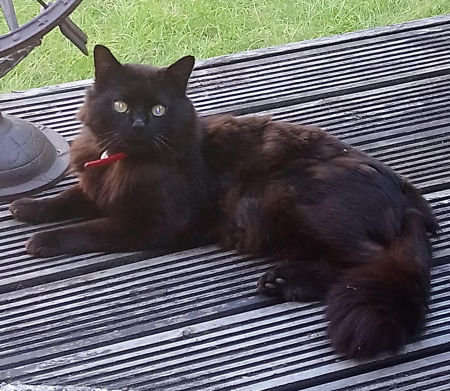 Found Unknown - Other Cat in Sheffield