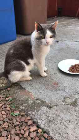 Found Unknown - Other Cat in Slamannan