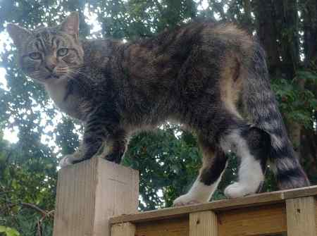 Found Tabby Cat in London