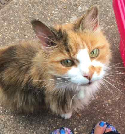 Found Unknown - Other Cat in Nottingham