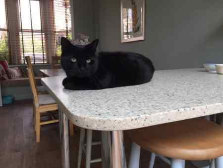 Found Domestic Short Hair Cat in Hunstanton