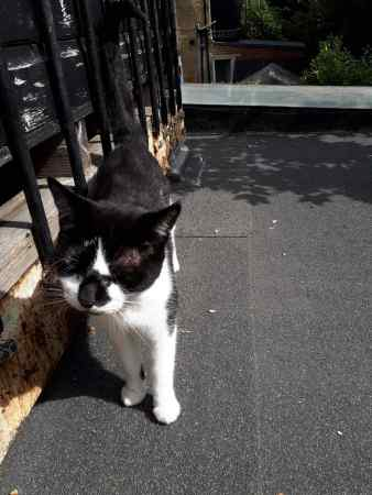 Found Unknown - Other Cat in Mitcham