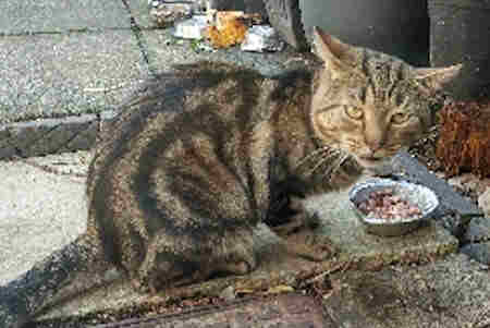 Found Tabby Cat in Stockport