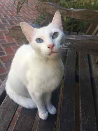Found Domestic Short Hair Cat in London - EC3N