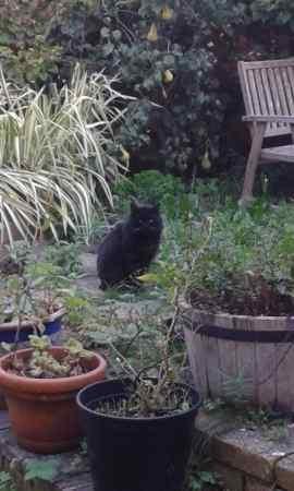 Found Domestic Short Hair Cat in Southampton