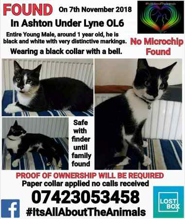 Found Domestic Short Hair Cat in Ashton Under Lyne