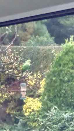 Found Parrot, Parakeet Bird in Leeds