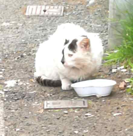 Found Unknown - Other Cats in Radcliffe