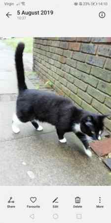 Found Unknown - Other Cats in Islington