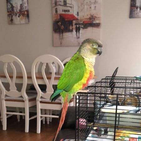 Found Unknown - Other Birds in Tolworth
