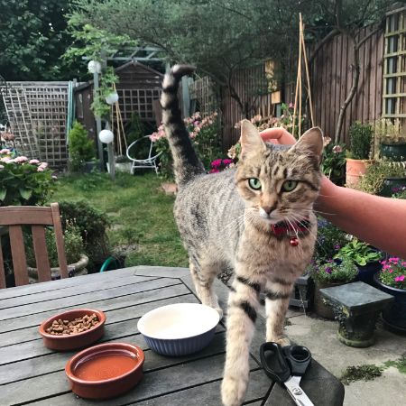 Found Bengal Cats in Buckhurst Hill