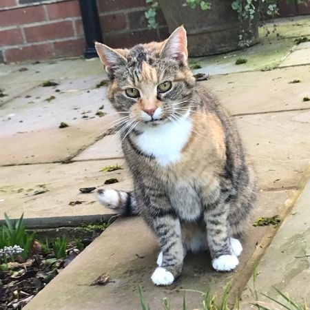 Found Unknown - Other Cats in North Waltham, Basingstoke