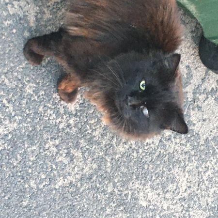 Found Semi-Long Hair Cats in Wednesbury