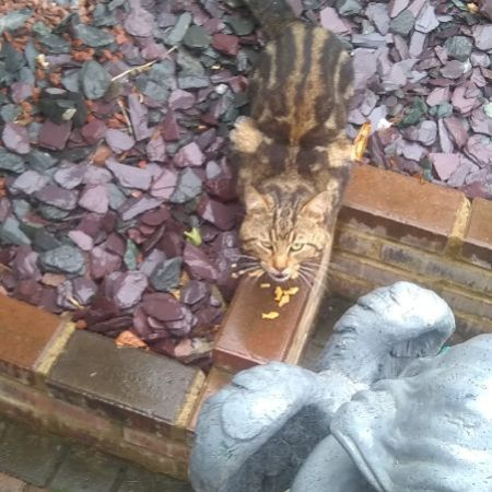 Found Domestic Short Hair Cats in Middlesbrough