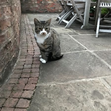 Found Tabby Cats in Sowerby Thirsk