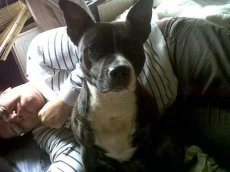 Pet Finder,lost pet finder,pet finder websites,home again pet finder,pet finders near me