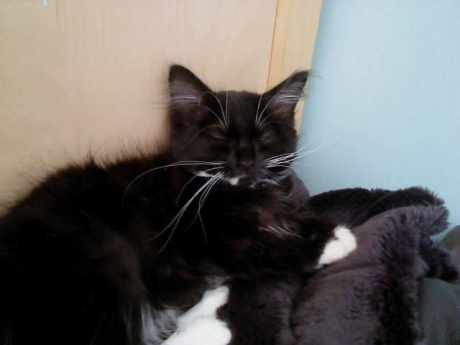 Missing Semi-Long Hair Cats in Coseley