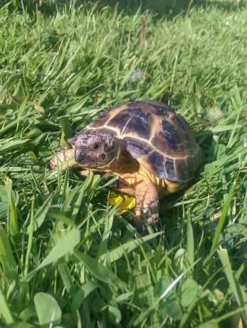 Missing Tortoise Exotic in Leeds