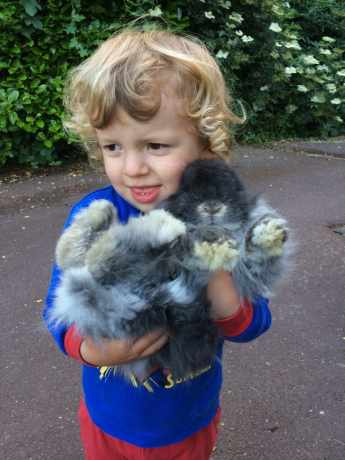 Missing Lop Eared Rabbits in Lowdham