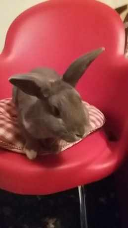 Missing Unknown - Other Rabbits in Bristol