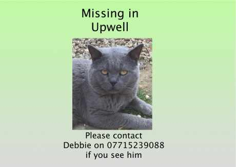 Missing British Blue Cats in Upwell, Wisbech