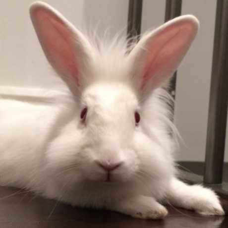 Missing Unknown - Other Rabbits in Winchmore Hill