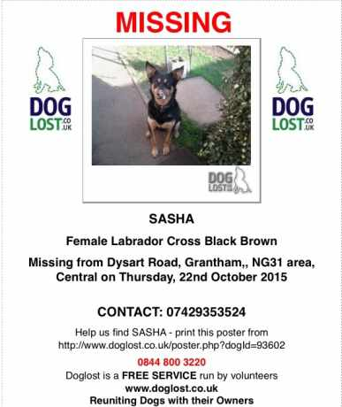 Missing Cross Mixed Dog in Grantham
