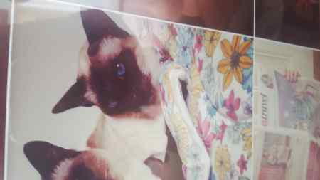 Missing Siamese Cat in Liverpool