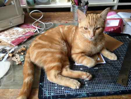 Missing Domestic Short Hair Cats in Rendlesham